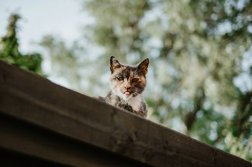 selective focus photography of calico cat on roof