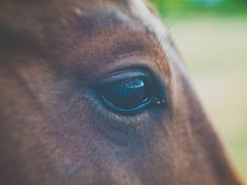 selective focus photography of horse eye