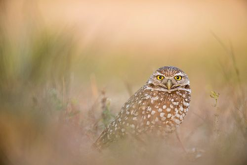 shallow focus photography of owl