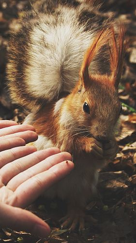squirrel beside human hands