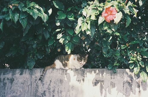 photo tricolored calico cat on top of wall free for commercial use images