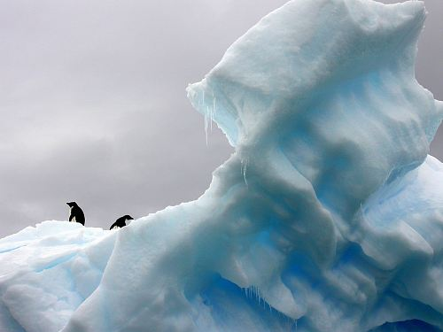 photo two penguins standing on top of glacier free for commercial use images
