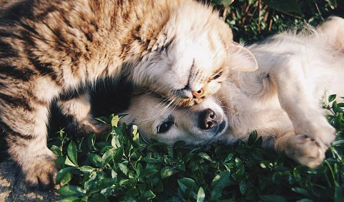 white dog and gray cat hugging each other on grass