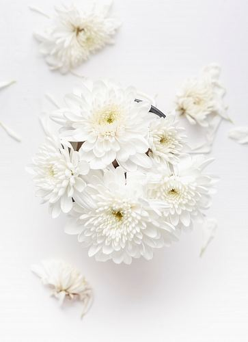 photo white petaled flower on white background free for commercial use images
