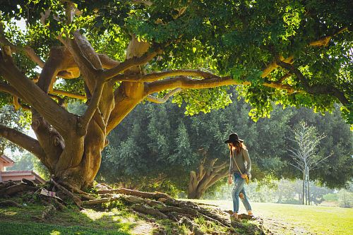 photo woman walking under tree during daytime free for commercial use images