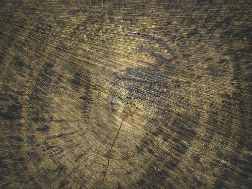 texture  hardwood