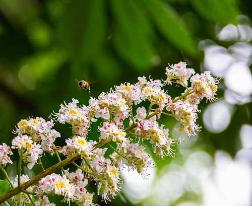 pollen white petaled flowers blossom