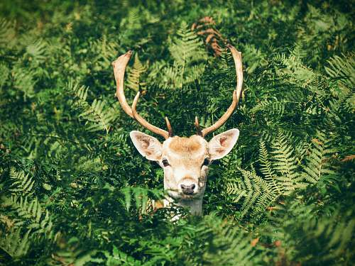 nature brown and white deer surrounded by green plants antlers