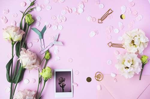 cream pink flowers creme