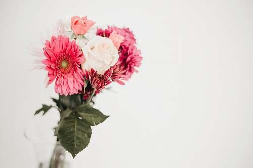 plant pink-petaled flower blossom