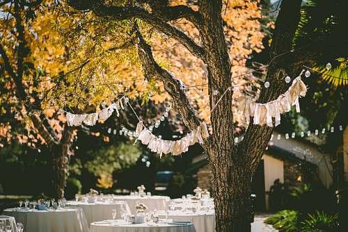 wedding orange leafed tree with orange banderittas tree