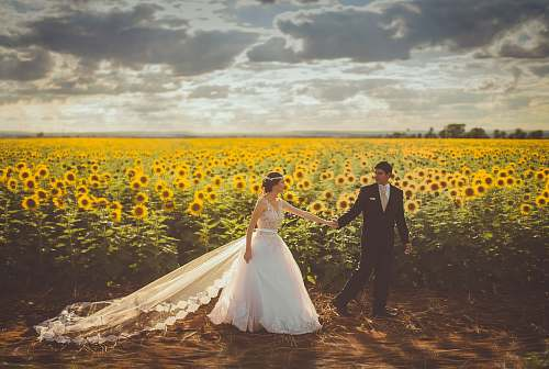 love bride and groom walking in front of sunflower field people
