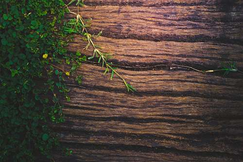 plant green-leaf plants on brown wooden surface tree