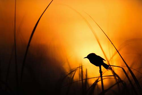 animal silhouette of bird bird