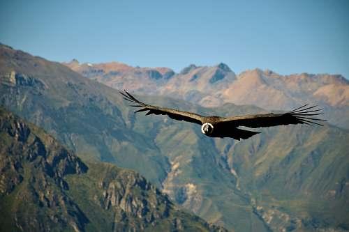 bird brown bird vulture