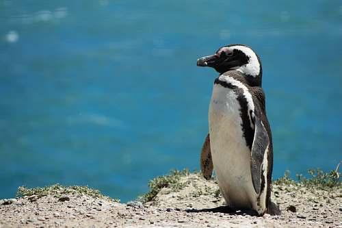 penguin penguin during daytime animal