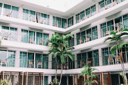 hotel coconut palm trees in hotel lobby balcony