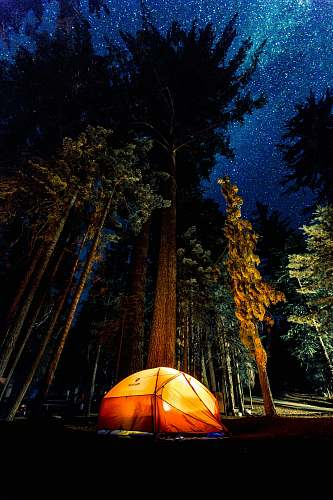 stars camping in forest during nightime tent