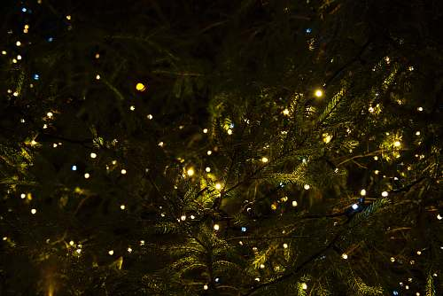 light green tree with yellow lights lights