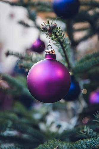 ornament purple Christmas ball hang on Christmas tree purple