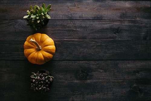 autumn photo of orange squash beside potted succulent plants thanksgiving