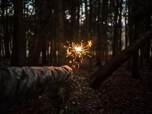 forest person holding sparkler at the middle of forest outdoors