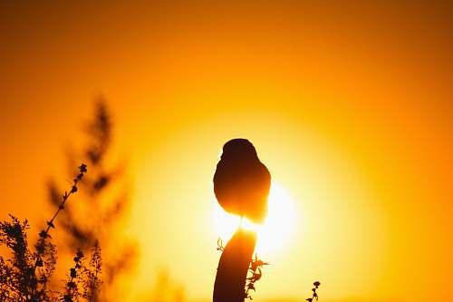 light silhouette of flower bud during sunset sunlight