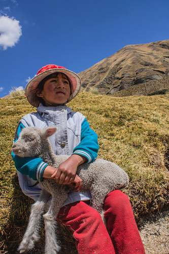 person white sheep on boy's lap sitting on hill people
