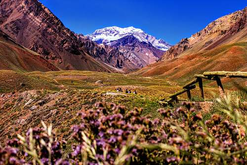 outdoors purple-petaled flowers near mountain during daytime mountain