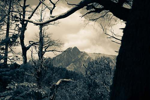 tree rocky mountain photography plant