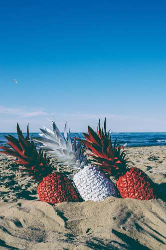 food red and white pineapples on seashore plant