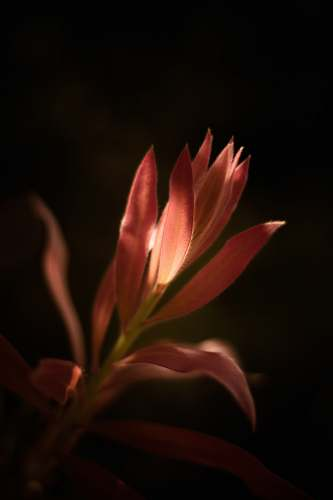 flower closeup photography of pink flower with sun ray hitting its petal blossom