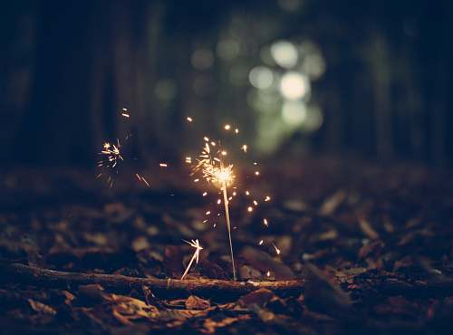 flora selective focus photography of sparklers weed