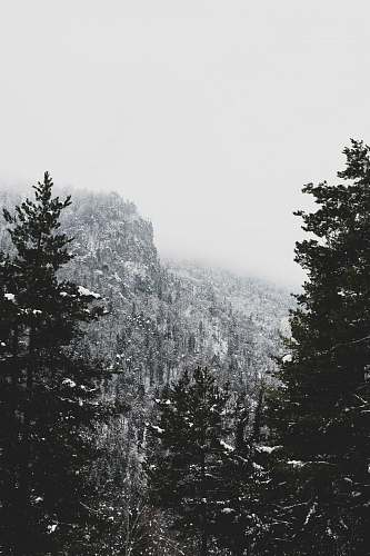 mountain grayscale photo of snow covered mountain and trees tree