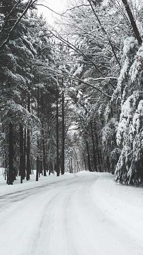 black-and-white road surrounded by trees during winter grey