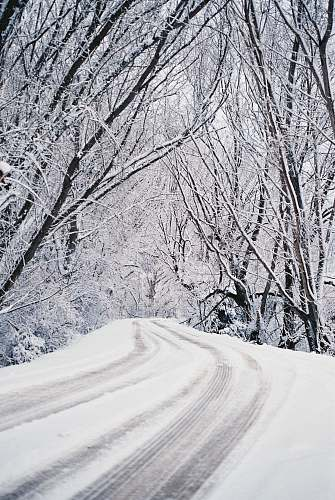grey snow covered road between trees landscape