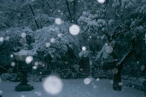 winter snow covered trees near stairway outdoors