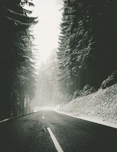 snow foggy road near trees road
