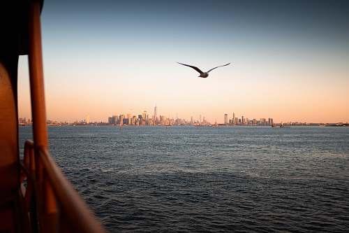 bird bird flying over the sea during sunset flying