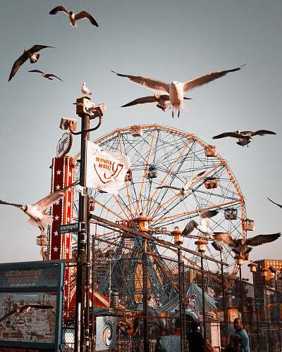 seagull flock of birds flying near ferris wheel animal