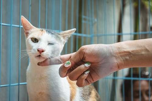 person shallow focus photo of white and orange cat cat
