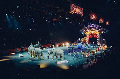 circus gray elephants performing on circus wildlife