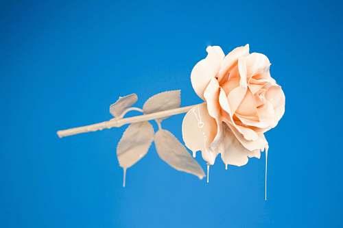 art photo of orange flower nature