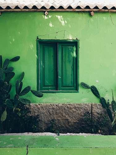 wall closed green wooden window palmeira