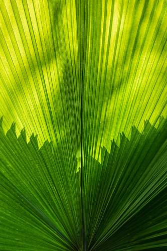 plant green palm leave leaf