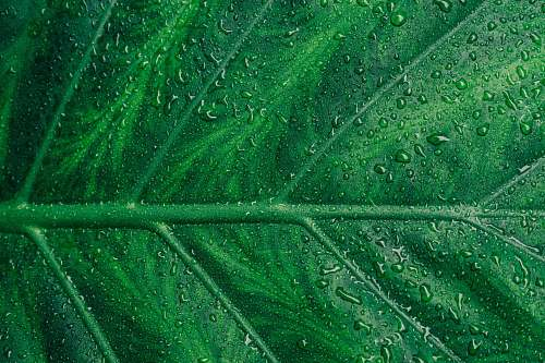 nature water droplets on green leaf texture