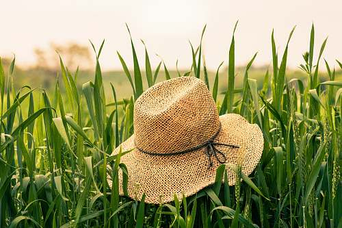 grass brown woven hat on green plant clothing