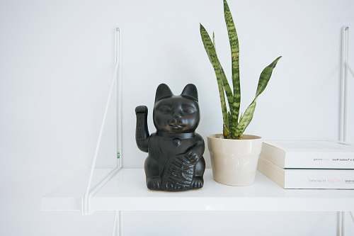 photo plant black manekineko cat near white potted green leaf plant book free for commercial use images