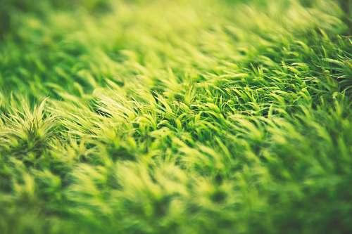 plant green grass grass