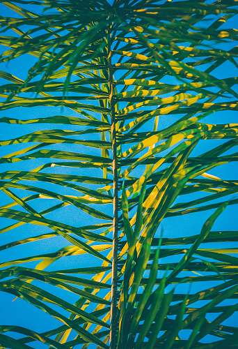 green green palm tree leaf at daytime plant